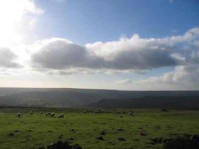 A view around Rosedale